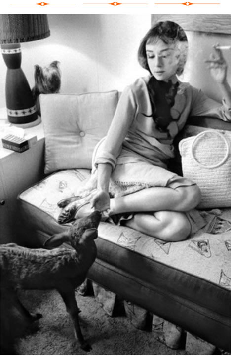 "Audrey Hepburn in her dressing room during the filming of ""Green Mansions."" She is feeding Ip the fawn while her Yorkshire terrier Mr. Famous looks on from the left."