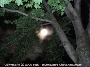 Full Moon Through the Trees